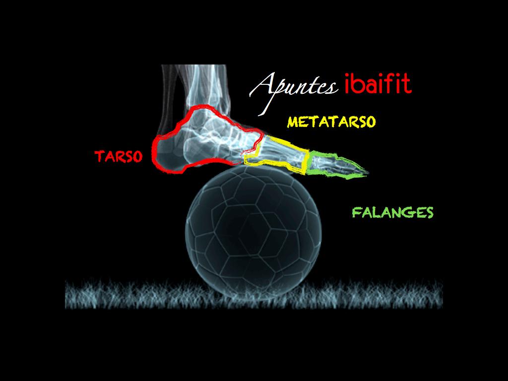 anatomia de los pies | EFMH.ES