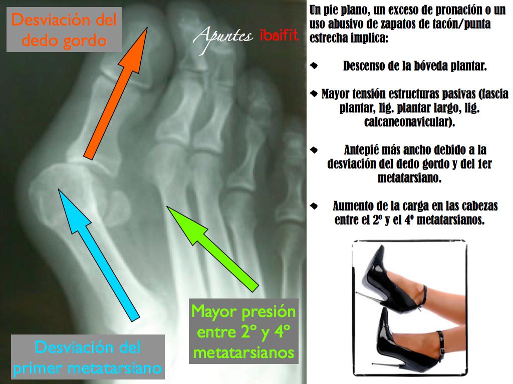 Anatomia de los pies a la cabeza (II) – Pierna. | EFMH.ES