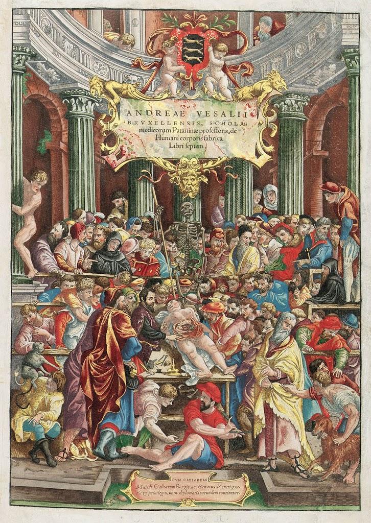 HISTORIA DE LA ANATOMÍA (II): El descubrimiento del cuerpo en la ...