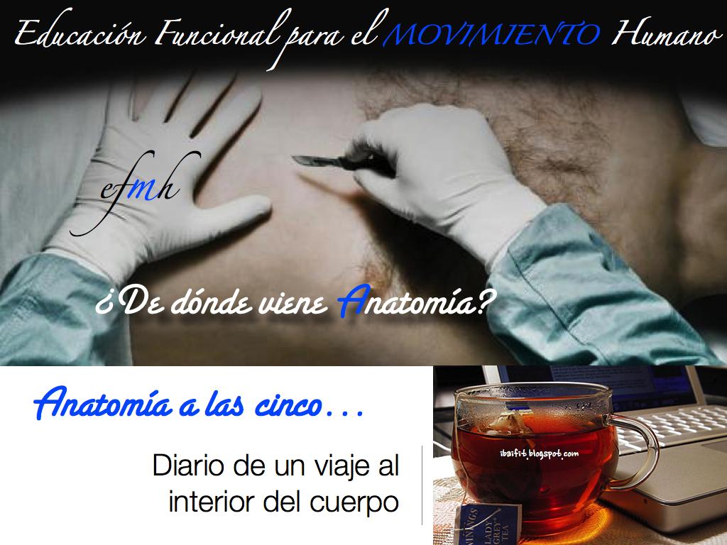 Historia_Medicina_Anatomia_ibaifit_De_donde_viene_anatomi-CC-81a