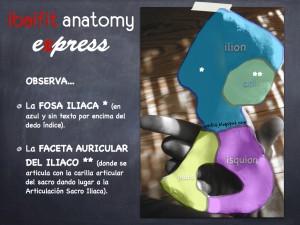 ibaifit anatomy express