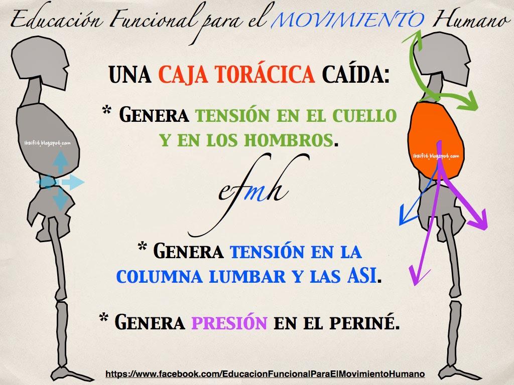 CAJA TORÁCICA CAÍDA | EFMH.ES