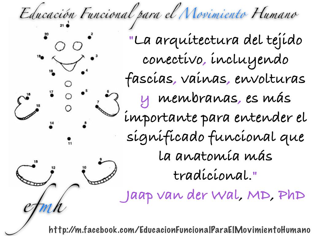 Educacion-Funcional-para-el-Movimiento-Humano_arquitectura_tejido_conectivo