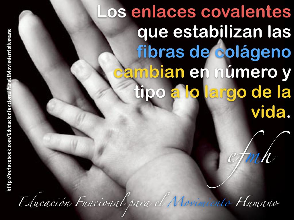 COLAGENO_FIBRAS_ENLACES_EDUCACION_FUNCIONAL_MOVIMIENTO_HUMANO