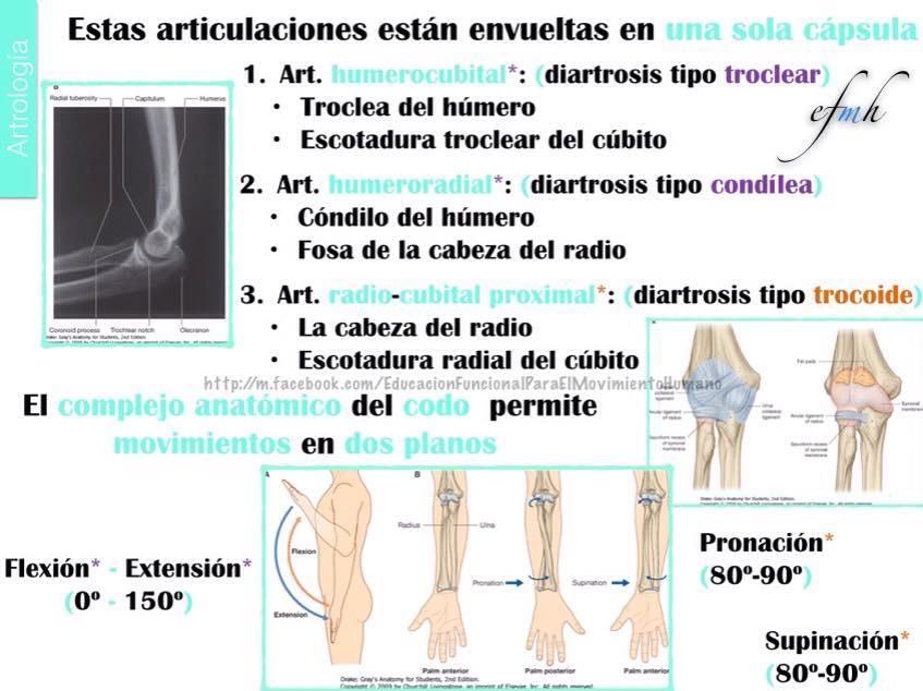 Artrología codo efmh