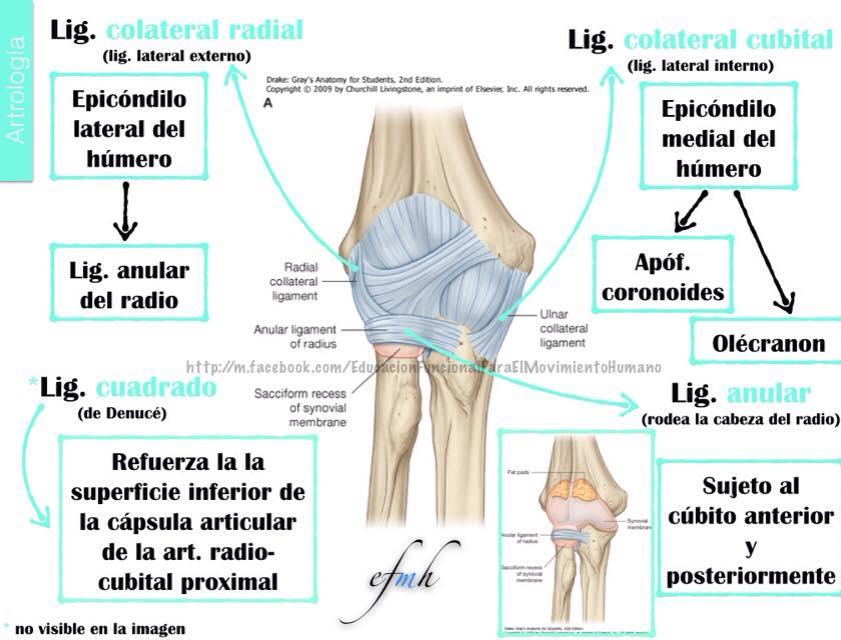 Osteología codo efmh