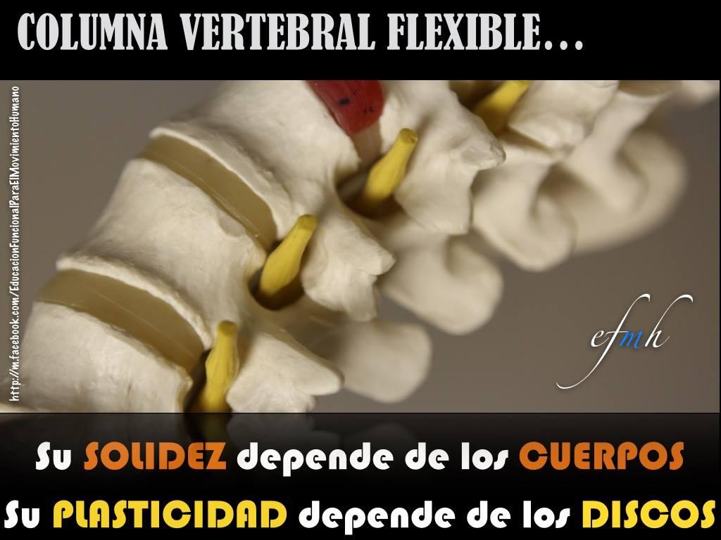 Columna vertebral, solidez y plasticidad