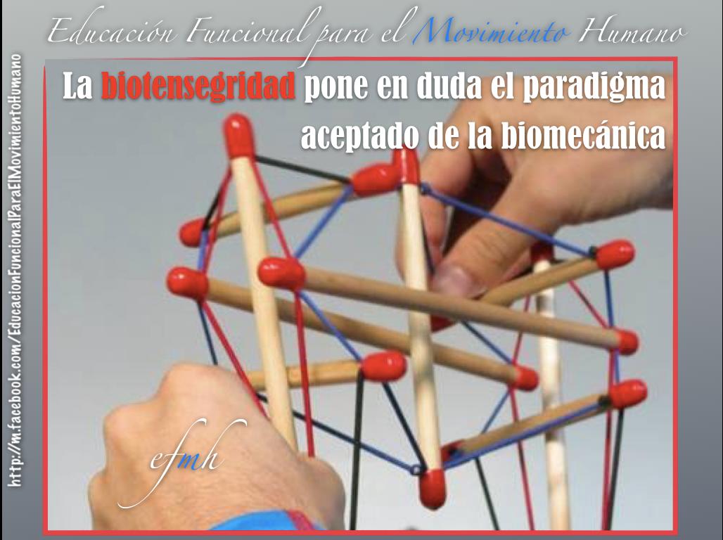 Tensegridad, biotensegridad, fascia y movimiento
