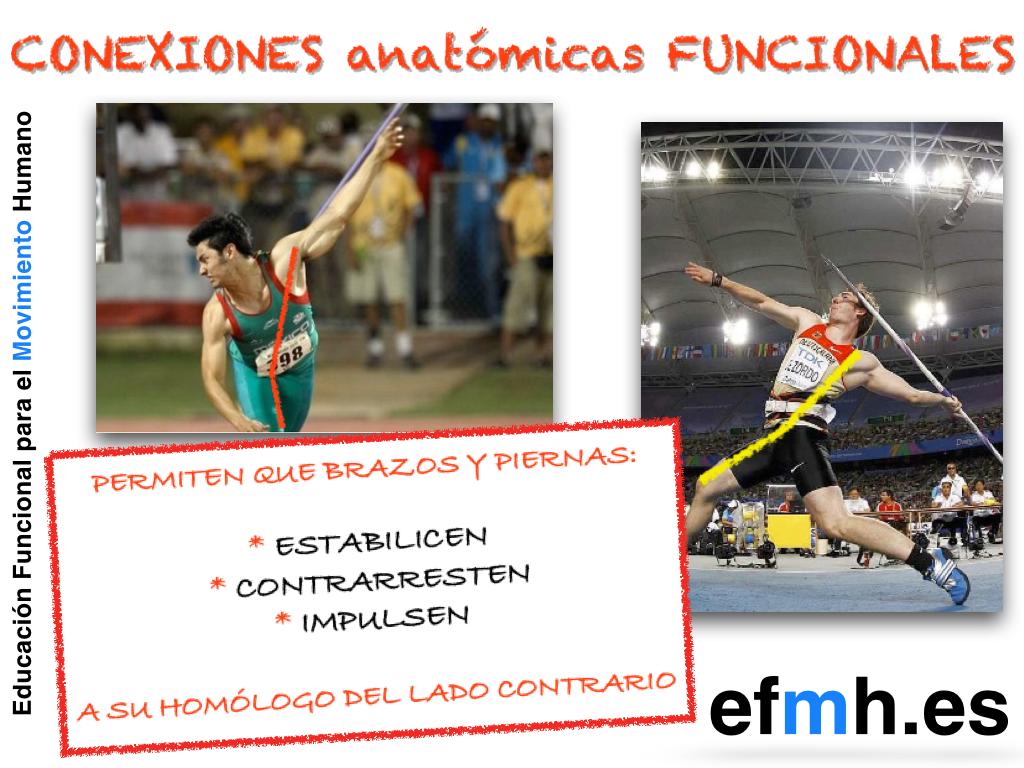 Conexiones anatómicas funcionales.PNG