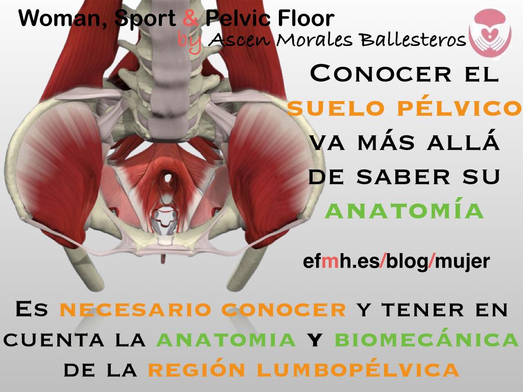 El suelo pélvico va más allá de su anatomía muscular. | EFMH.ES