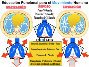 Respiracion__Anatomia_Fisiologia_Fascia_Presiones_2015.003