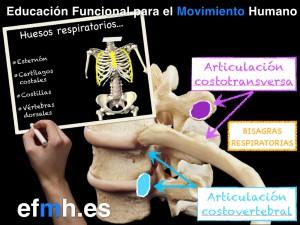 Respiracion__Anatomia_Fisiologia_Fascia_Presiones_2015.005