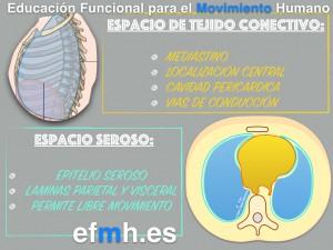 Respiracion__Anatomia_Fisiologia_Fascia_Presiones_2015.006