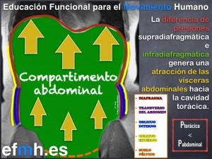 Respiracion__Anatomia_Fisiologia_Fascia_Presiones_2015.008