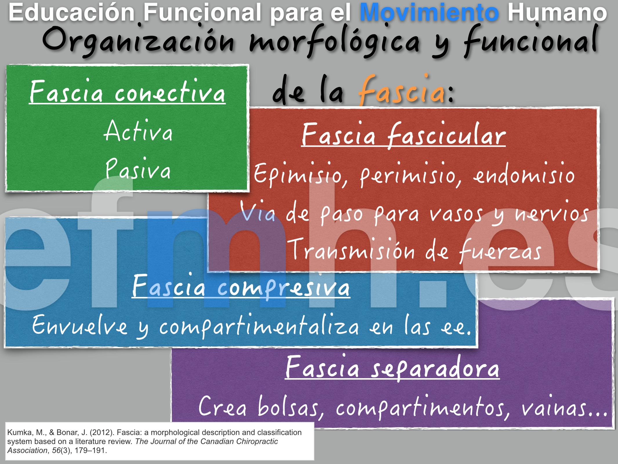 organización morfologica y funcional de la fascia