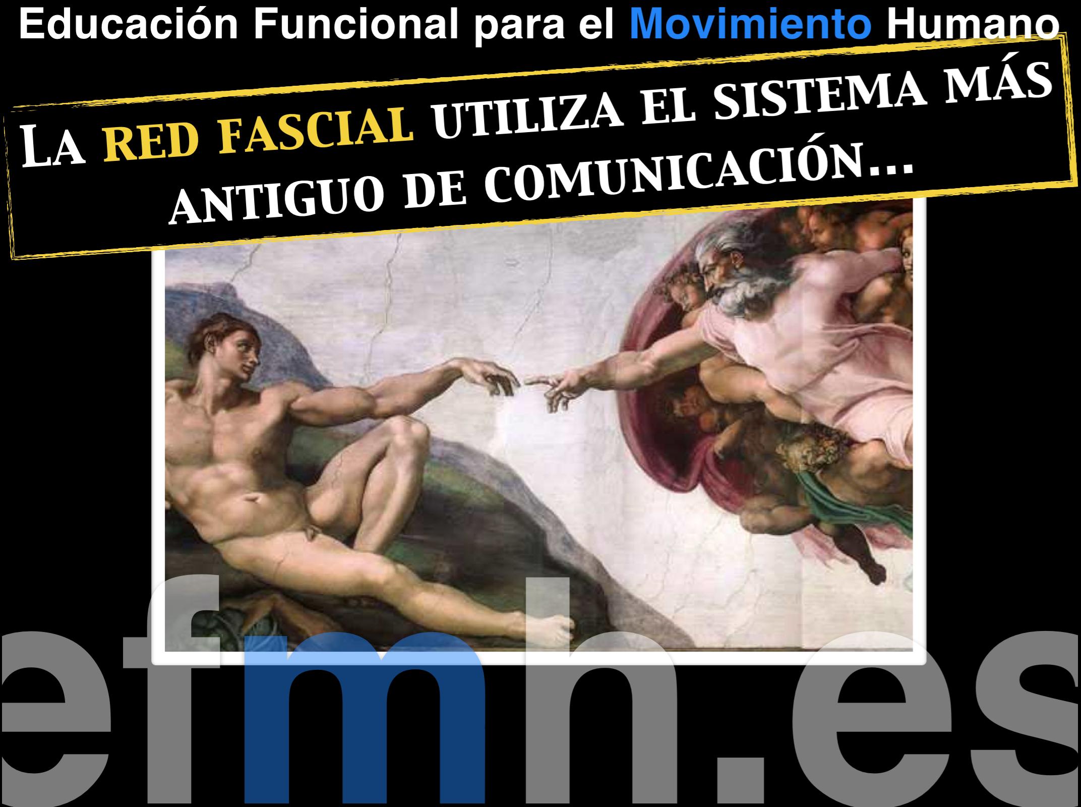 Sistema_comunicacion_fascia