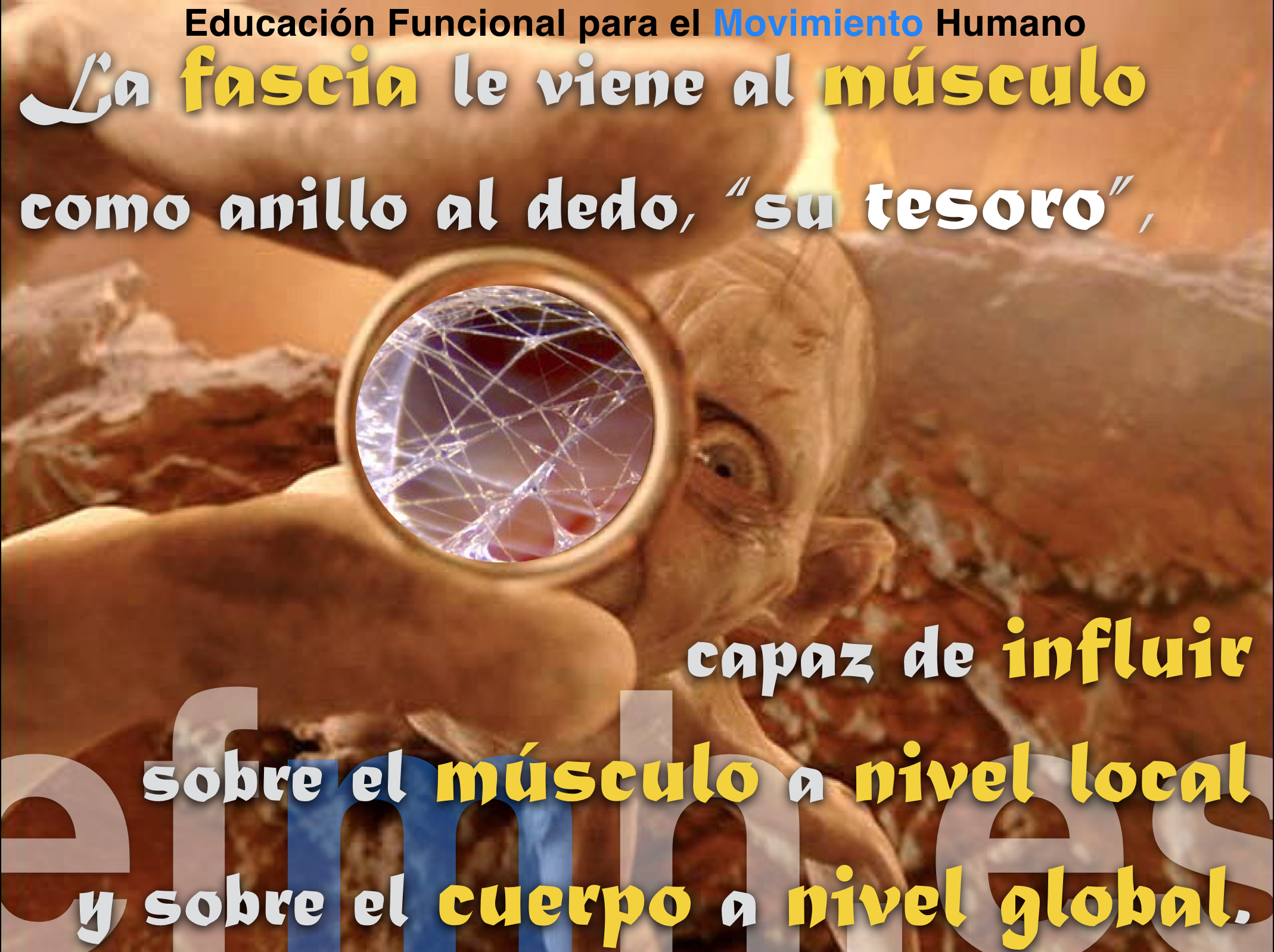 fascia musculo miofascia tesoro