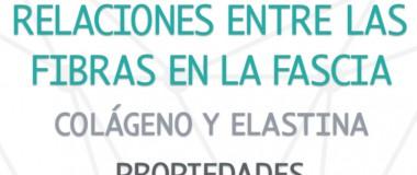 Relaciones_fibras_colageno_elastina_fascia