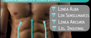 lineas_referencia_tejidos blandos_abdomen